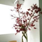 春寒 茶月斎様にて季節の花を