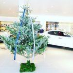 クリスマスーショールームへの装飾2